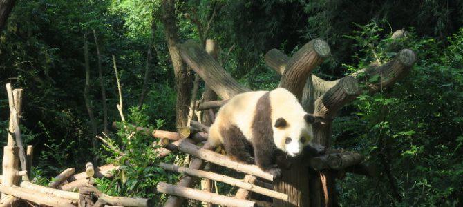 Les photos de Chengdu et des pandas