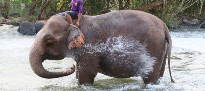 Des nouvelles du Laos (Tiago et Lilou)