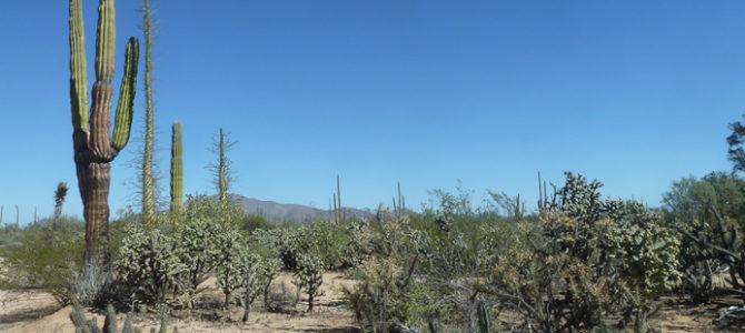 Les premières photos du Mexique : Basse Californie du nord