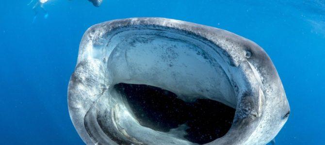 Basse Californie : des cactus aux requins baleines (par Tiago et Lilou)